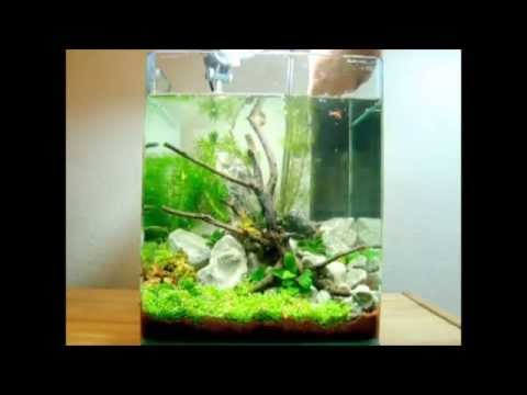 betta mini cube nano aquarium funnydog tv. Black Bedroom Furniture Sets. Home Design Ideas