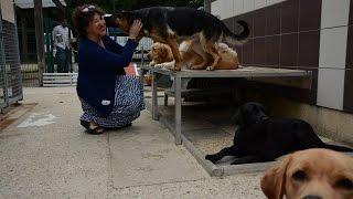 Allô Amejjay : Emission sur les coulisses de l'école de chiens guides d'aveugles de Paris.