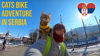 Cats bike ride to Serbia ‍♂❤