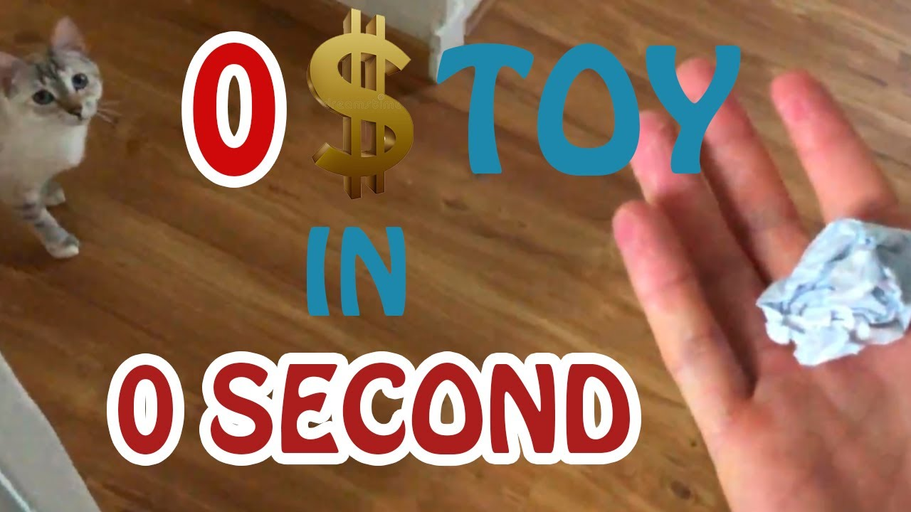 How to make a cat toy with 0$ in 0 second !!