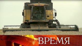 В России ожидается рекордный урожай зерна