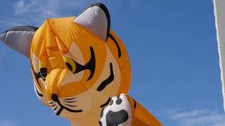 День тигра 2018