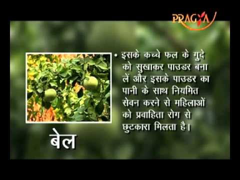 Bael Fruit(Stone Apple) Nutrition Facts And Health Benefits-Dr. Anand Kumari Sharma(Ayurveda Expert)