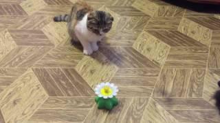 Игрушка для кошек. Бабочка с Алиэкспресс.
