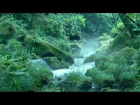 サントリー天然水の森『天然水の...