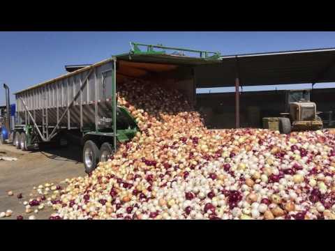 Trinity Trailer - Unloading Onions
