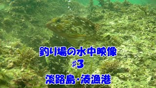 釣場の水中映像#3 淡路島・湊漁港 カサゴ食いつく