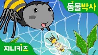 거미의 먹이사냥   절지동물 거미   거미의 생태   동물박사★지니키즈