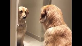 """""""Perro se mira al espejo y..."""""""