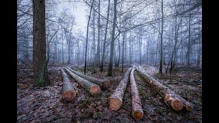 Harvester i ścinka drzew