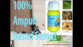 Regent 50 sc racun pembasmi pengusir semut kecoa rayap ampuh