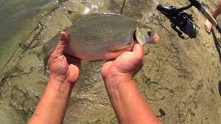 Рыбалка с ночёвкой на реке,уха и хорошее настроение (Дневник рыболова)