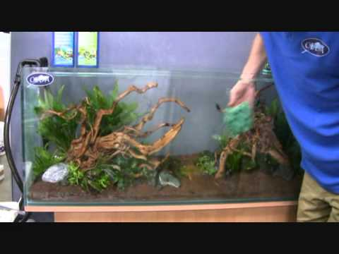 Mise en eau installation d 39 un aquarium youtube for Racine pour aquarium