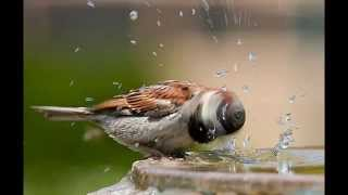 اجمل الصور الملتقطة للحيوانات Beautiful imagery of animals