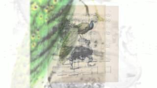 Винтажные изображения красивые птицы