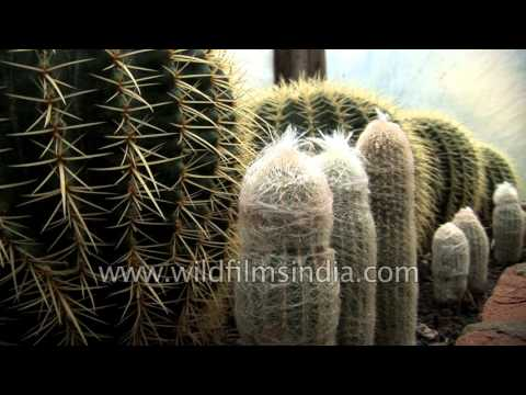 India's best Cactus collection in Sikkim?