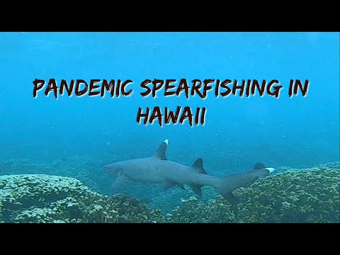 Spear Fishing During A Pandemic In Hawaii