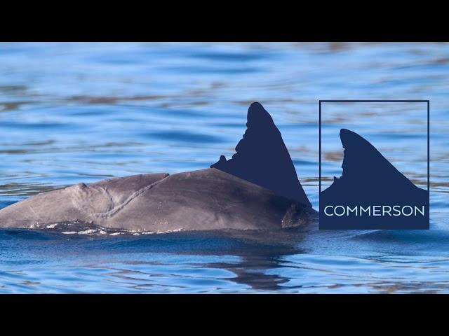 La Photo-identification des dauphins