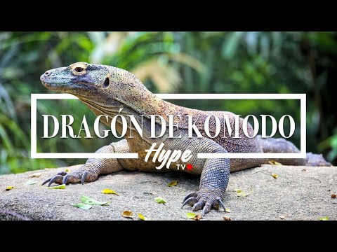 Hunting Komodo by Camera con Perama tour and travel | Hype E
