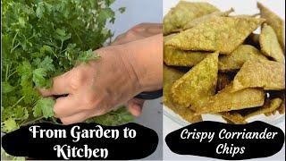 Crispy Coriander Chips made using Coriander Terrace Garden - Tamil recipe Maadi Thottam-மட தடடம