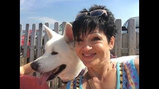 #97.Зашли в бар ДЛЯ собак в Америке.Поехали с собакой к океану..Такого вы еще не видели!