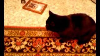 падение кошки сони.mp4