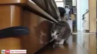 Прикольные кошки. Epic Funny Cats - Cute Cats Compilation!