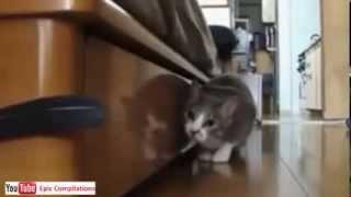 Прикольные кошки. Epic Funny Cats - Cute Cats Compilation!