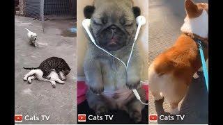 cats tv | chó mèo hài hước nhất quả đất - xem là cười té ghế | tik tok china 4k