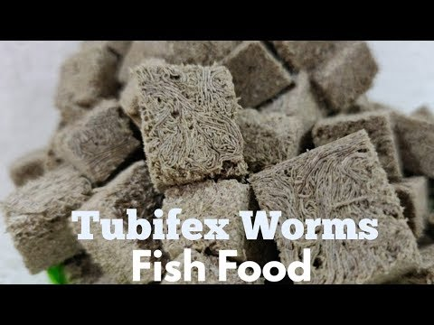 Tubifex Worms Fish Food For All Types Of Aquarium Fish