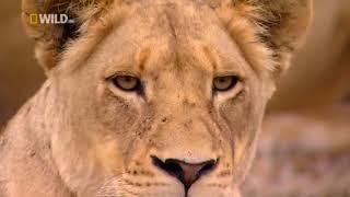 Мир животных Африка 2018 новинка