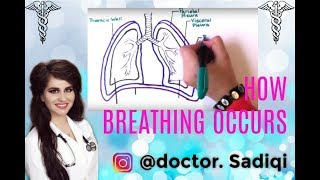 HOW BREATHING OCCURS EXPLAINED UNDER 4 MINUTES!!!