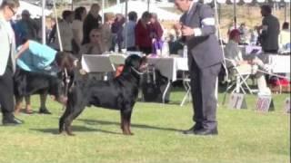 """""""pilot"""" - 2011 Akc #1 Rottweiler"""
