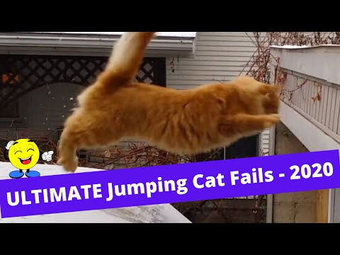 Always Funny - Ultimate Jumping Cat Fails - 2020
