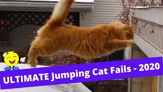 Always Funny  Ultimate Jumping Cat Fails  2020