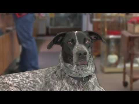 Stella the Talking Dog American Antiques and Jewelry Commercial