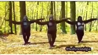 funny video monki