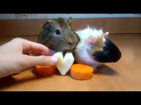 знакомства морковка