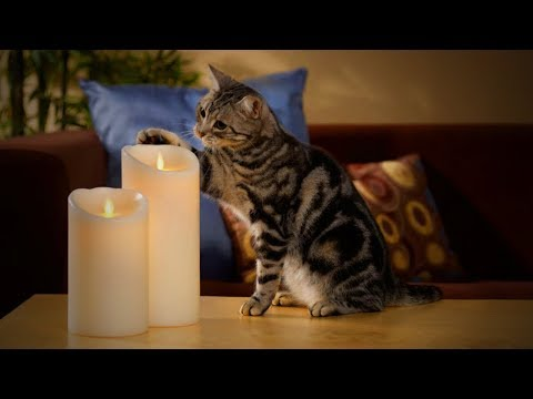Cats and Candles 🐱🕯 Funny Cats Reactions to Candles (Full) [Funny Pets]