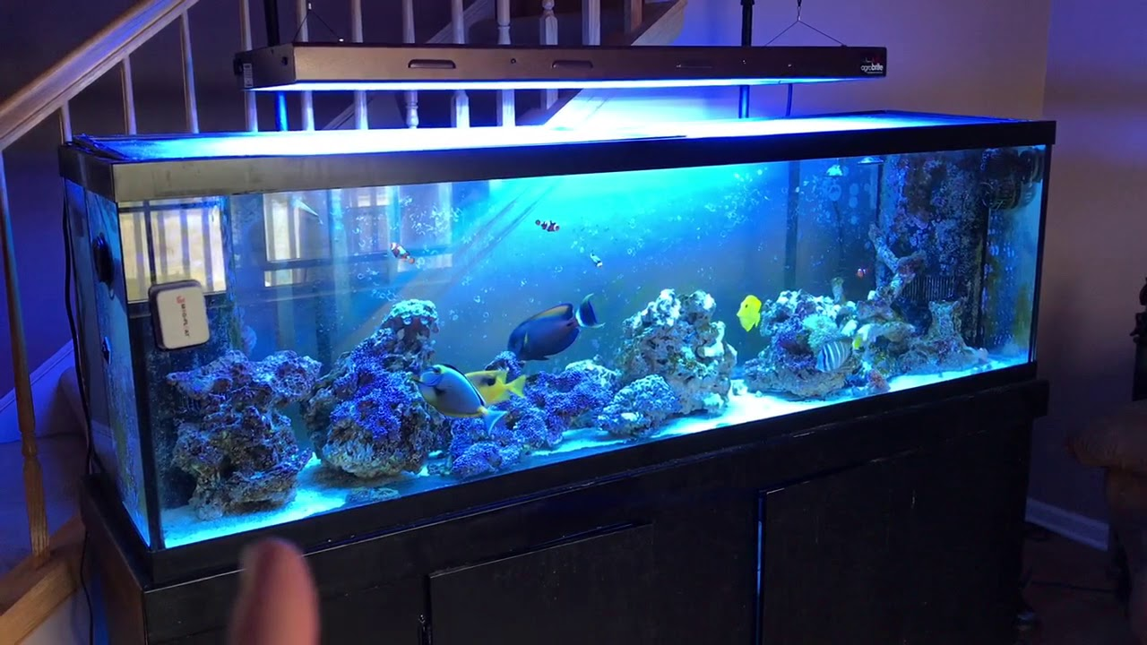 How To Kill Green Hair Algae In Saltwater Tank Fast Using