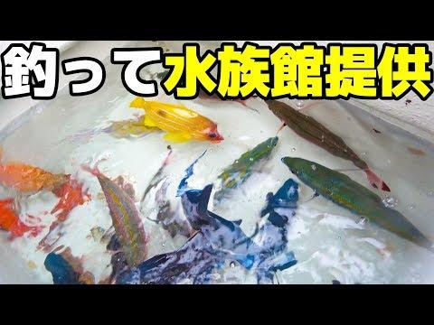 釣った魚を水族館へ提供!【ハイサイ水族館】