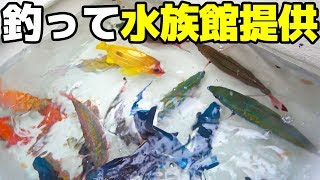 釣った魚を水族館へ提供!【ハイサイ水族館】 thumbnail