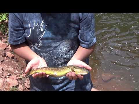 Fishing In Basalt CO, Frying Pan River 7/4/19