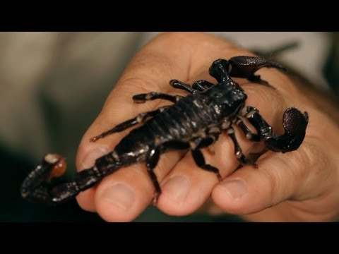 Types of Scorpions | Pet Tarantulas