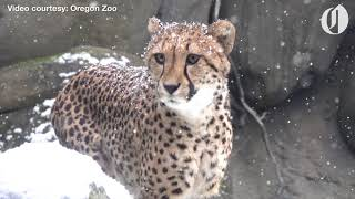 Oregon Zoo animals get a snow day 2018