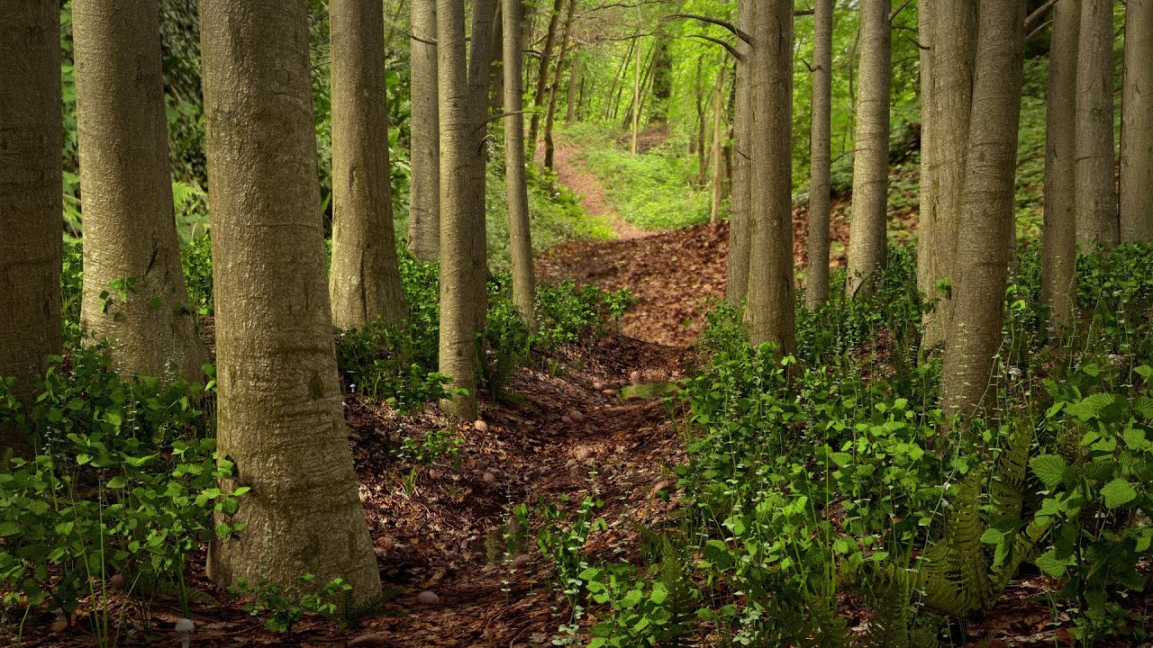Image result for woodland path