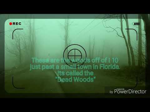 Haunted woods near Madison, Florida