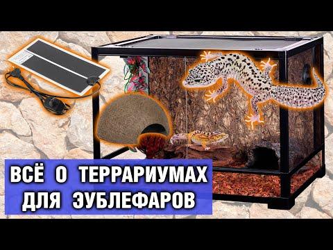 Террариум для геккона эублефара — Обустройство, размеры, оформление