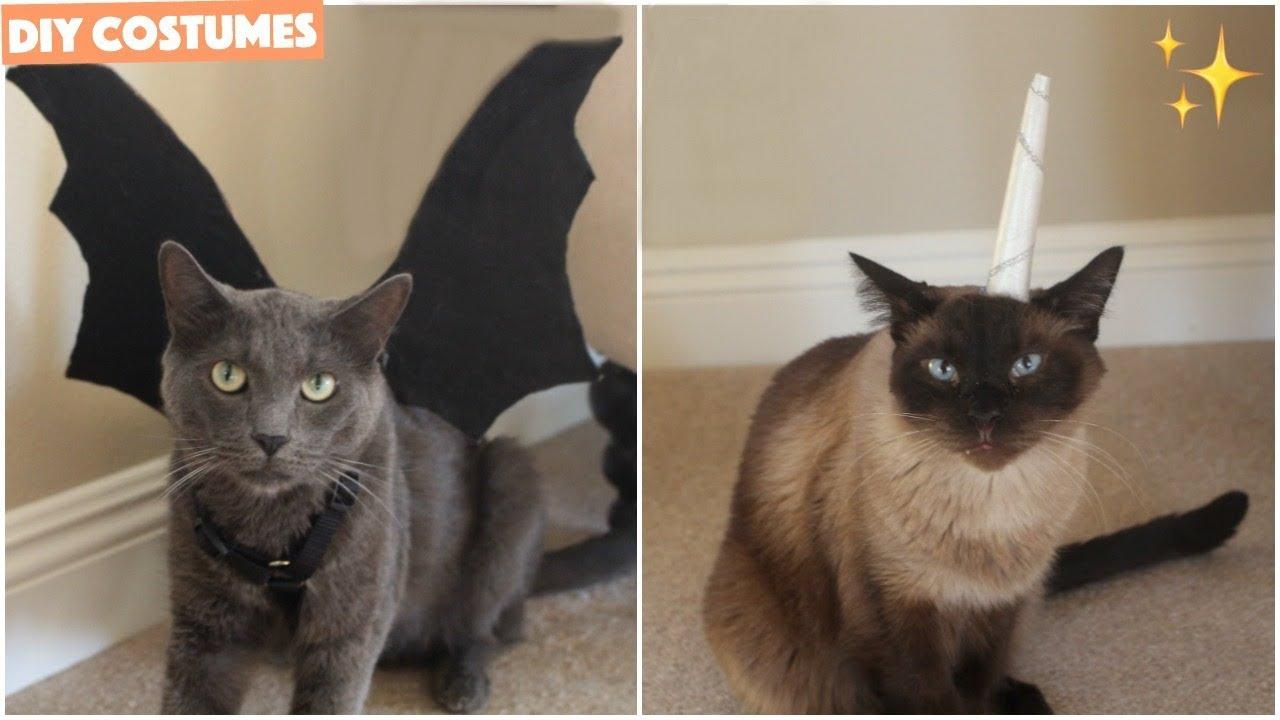 Diy Cat Halloween Costumes