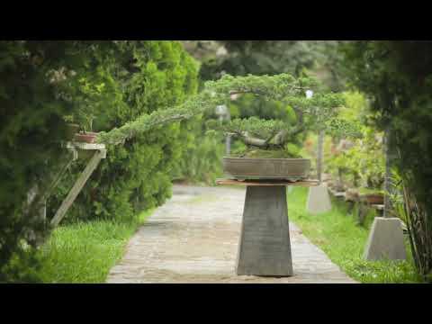 Takehara - Documental (Documental sobre Bonsai en Peru)